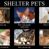 shelter-pets