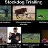 stockdog